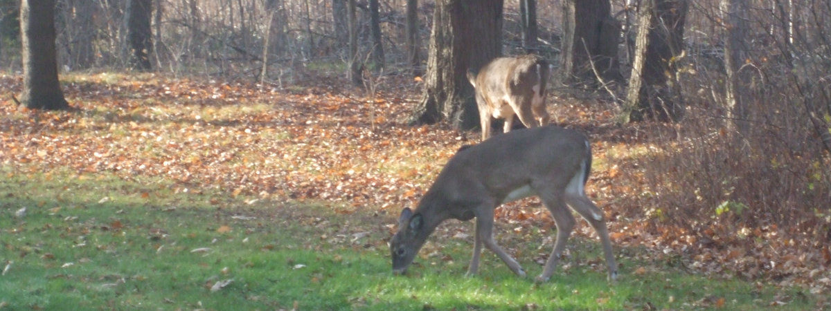 Hunting Crivitz Wisconsin