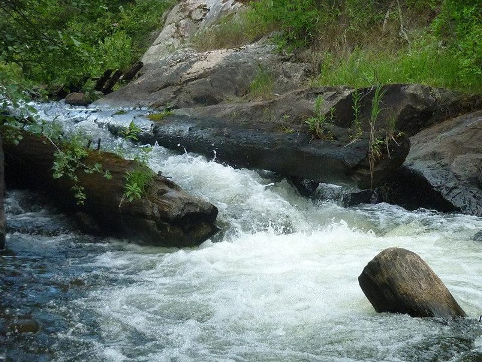 Carney Rapids